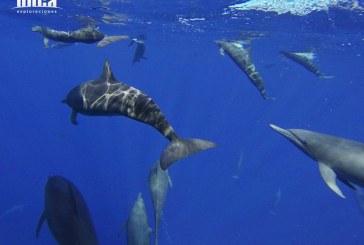 Expedicion de Delfines en Islas