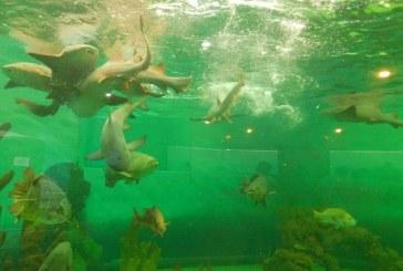 Un acuario diferente y renovado  para esta Semana Santa