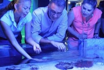 Acuario Mazatlán se reposiciona en las preferencias de turistas y locales