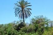 Invitación a El Quelite y la Zona Trópico de Sinaloa Otoño-Invierno