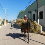 Este jueves 09 el conversatorio Chametla La meca de la arqueología sinaloense