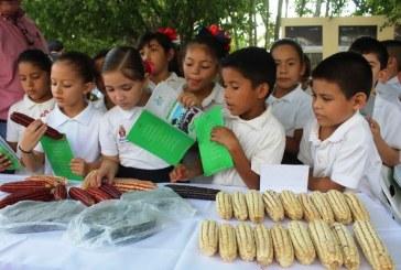 Maíz Criollo Alternativa Saludable y de Desarrollo en Comunidades de Sinaloa