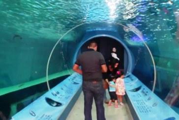 Acuario Mazatlán sigue en las preferencias de locales y visitantes