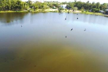 <center>Mazatlán Naturaleza y Desarrollo: Encrucijada</center>