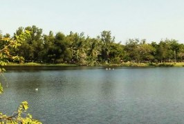 <center>Laguna del Camarón en Mazatlán será Engullida por la Av. Bahía</center>