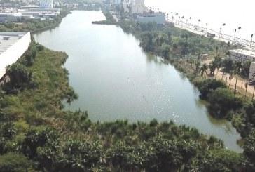 <center>Mazatlán: y la naturaleza salvaje que agoniza ante nuestros ojos</center>