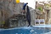 <center>Acuario de Mazatlán: Mi acuario interactivo</center>
