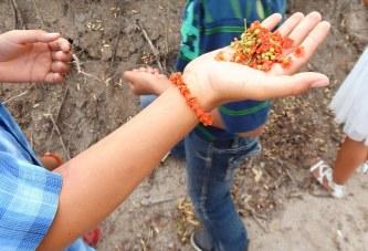 """<center>Invitan al """"Festival del Maíz y a los Festejos de San Juan"""" en Elota Pueblo Señorial</center>"""