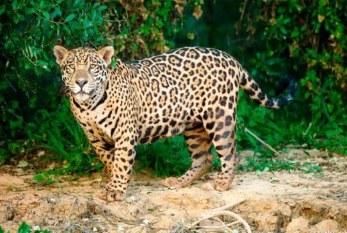 El Museo del Jaguar de Cabazán San Ignacio Sinaloa en la Zona Trópico