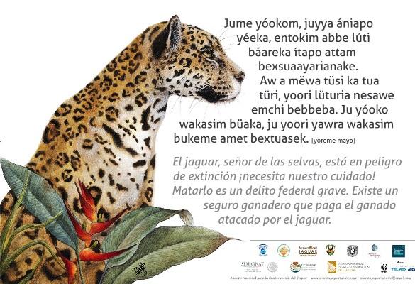 El Señora de las Selvas El Jagura Yamel Rubio 2018 Cartel