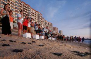 Liberación de Tortugas Mazatlán