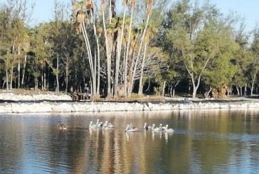 Conservación de las aves
