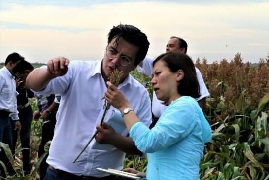 Sinaloa pudieran ser de los más beneficiados con exportación de sorgo
