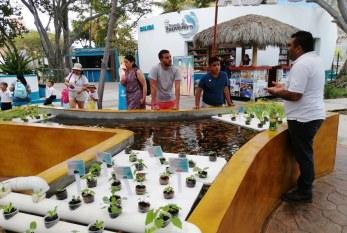Acuario Mazatlán y la Acuaponía: ¿Sabes qué es?