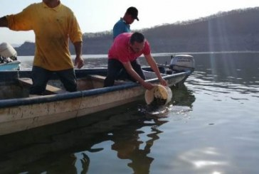 Un millón de crías de tilapia fueron liberadas en la presa Adolfo López Mateos