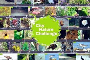 Reto Naturalista Urbano México #CityNatureChallenge.