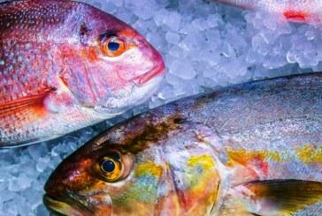 Estudio Revela que en Mazatlán se da el fraude de la sustitución con productos del mar