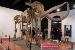 Mamut Museo Arqueológico de Mazatlán 2019