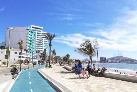 Palmeras del Malecón de Mazatlán: Mitos y Mitotes