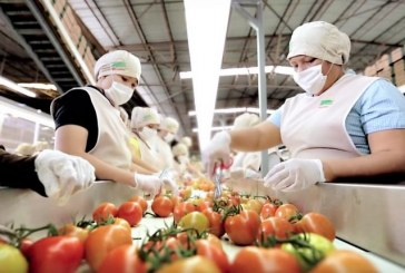 Sinaloa avanza en sus exportaciones en el primer semestre de 2019