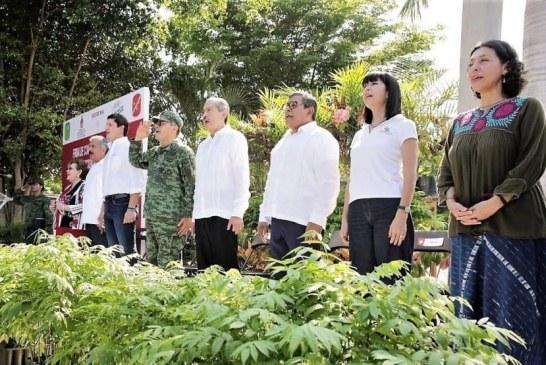 Con 250 mil árboles fomenta SEDESU la reforestación de Sinaloa