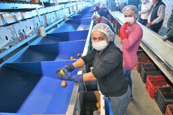 Sinaloa Registra Crecimiento de 2.7 Por ciento en 2018 Javier Lizárraga Mercado 2019 2