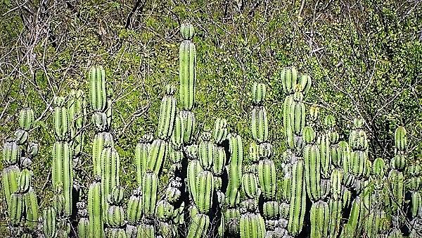 Carretera San Ignacio Sinaloa Tayoltita Durango Imagenes 2020 (18)