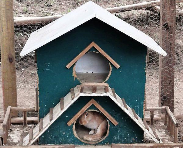 La Vaca Lupe Casa de lso Conejos Mazatlán 2020