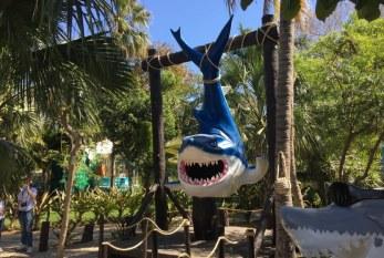 """Celebrará Acuario Mazatlán """"Día Mundial de la Vida Silvestre"""""""