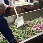Sinaloa gana fama de paraíso gastronómico