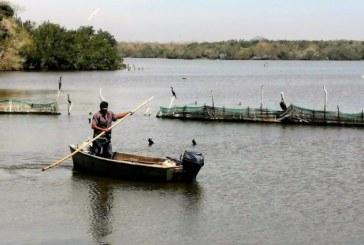 Estero de la Escopama en Mazatlán: Joya de la Zona Trópico
