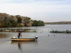 Estero de la Escopama en Mazatlán Vivir en la Abundancia pero Pobres 1