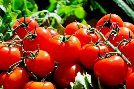 Agricultores Sinaloenses Protegen la Salud ante Covid-19