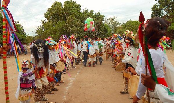 Festividades Religiosas Mayo-Yoremes Orgullo Distintivo de Sinaloa 2020 (2 d)