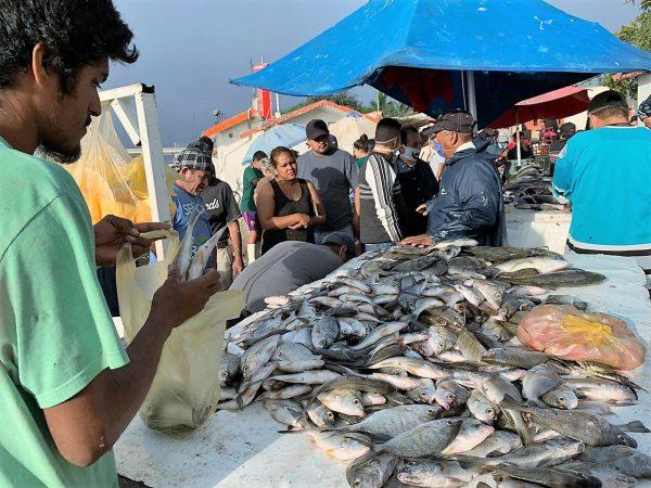 Llamado a Prestar Orientación a Puesteros del Mercado de Mariscos del Muelle de la Isla de la Piedra de Mazatlán Covid- 19 2020 (3)