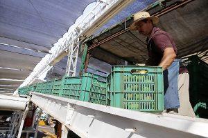 Sinaloa Crecimiento Positivo 2019 Javier Lizárraga Mercado 2020 1