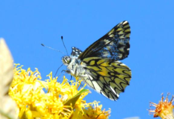 Día Internacional de la Diversidad Biológica 2020