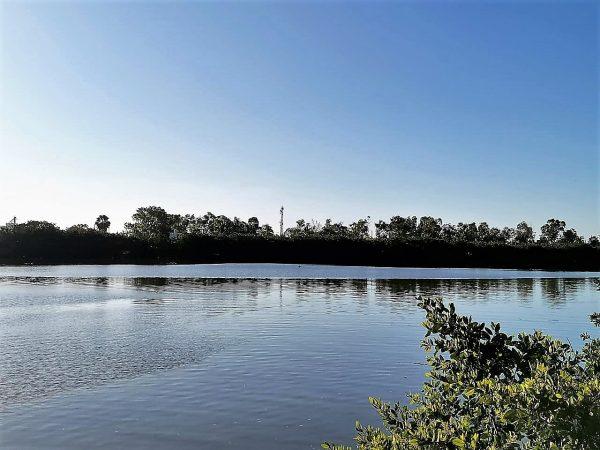Estero del Infiernillo el Gran Recurso Natural de Mazatlán Espera Paciente Peligrosa 2020 (5)
