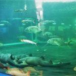 Acuario Mazatlán abre sus puertas el próximo 2 de julio