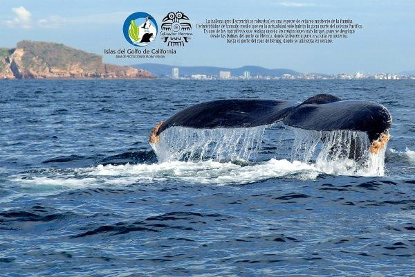 ExpoFoto Día Mundial del Medio Ambiente Mazatlán 2020 Salvador Herrera Conamp (1)