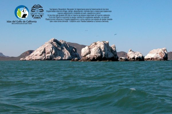ExpoFoto Día Mundial del Medio Ambiente Mazatlán 2020 Salvador Herrera Conamp (10)