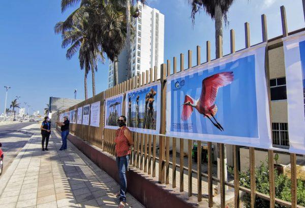 ExpoFoto Día Mundial del Medio Ambiente Mazatlán 2020 Salvador Herrera Conamp (2)