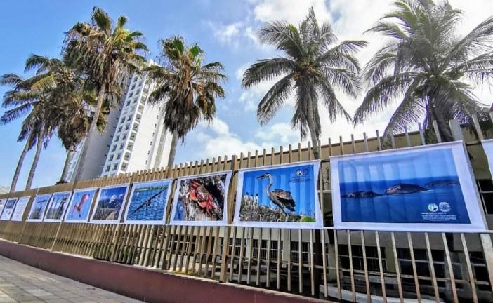Con Expo Fotográfico Celebran el Día Mundial del Medio Ambiente en Mazatlán
