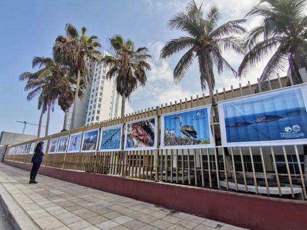 ExpoFoto Día Mundial del Medio Ambiente Mazatlán 2020 Salvador Herrera Conamp (4)
