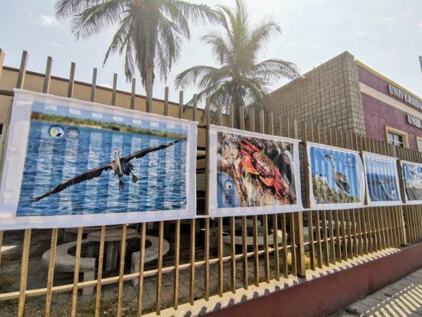 ExpoFoto Día Mundial del Medio Ambiente Mazatlán 2020 Salvador Herrera Conamp (6)