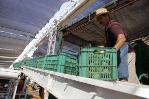 A pesar de que a nivel nacional la caída en exportaciones totales fue del -40,9 %, Sinaloa registró en abril-14,4 % gracias a los sectores agroalimentario, agropecuario, agroindustria y minería, por lo que seguiremos impulsando nuestras exportaciones y gestionando a favor de los productores sinaloenses