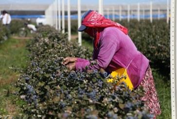 Fortalece a Sinaloa sus sectores primarios de la economía