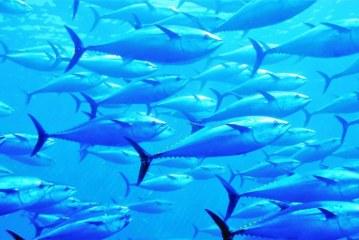 Pesca Azteca y Pinsa Celebran el Día Mundial de los Ocaénos
