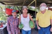 Alimentos Orgánicos para Prevenir el Covid – 19 en la Zona Trópico