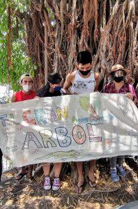 El gran árbol del arroyo de los jabalíes de Mazatlán, un icono ambiental que causa polémicas 2020 2